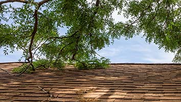 tree rubbing on roof